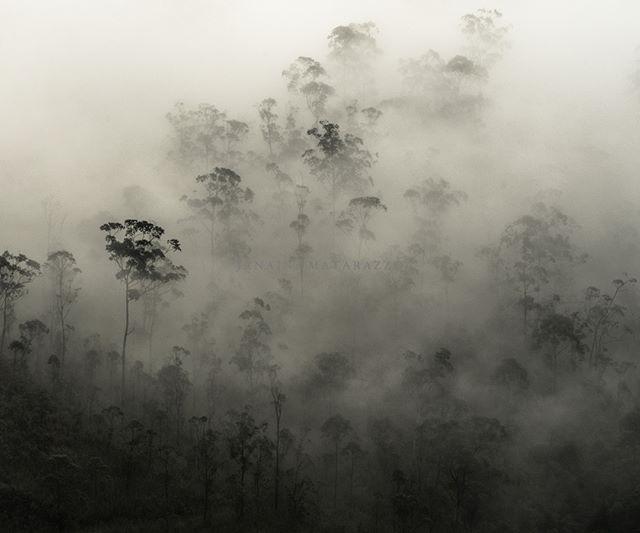 Sri Lanka 🇱🇰 Forest Mountains