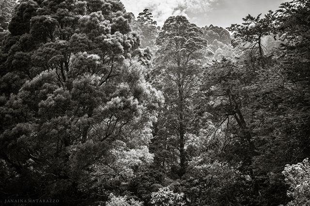 Floresta  . prints available 🗞 . . #janainamatarazzo #wallartdesign #gallerywallprints #fotografiasdanatureza #forestimages #florestas #decorprints #printsforyourhome #naturearts #decoraçãointeriores #fineartbrasil #srilankaart #srilankaforest