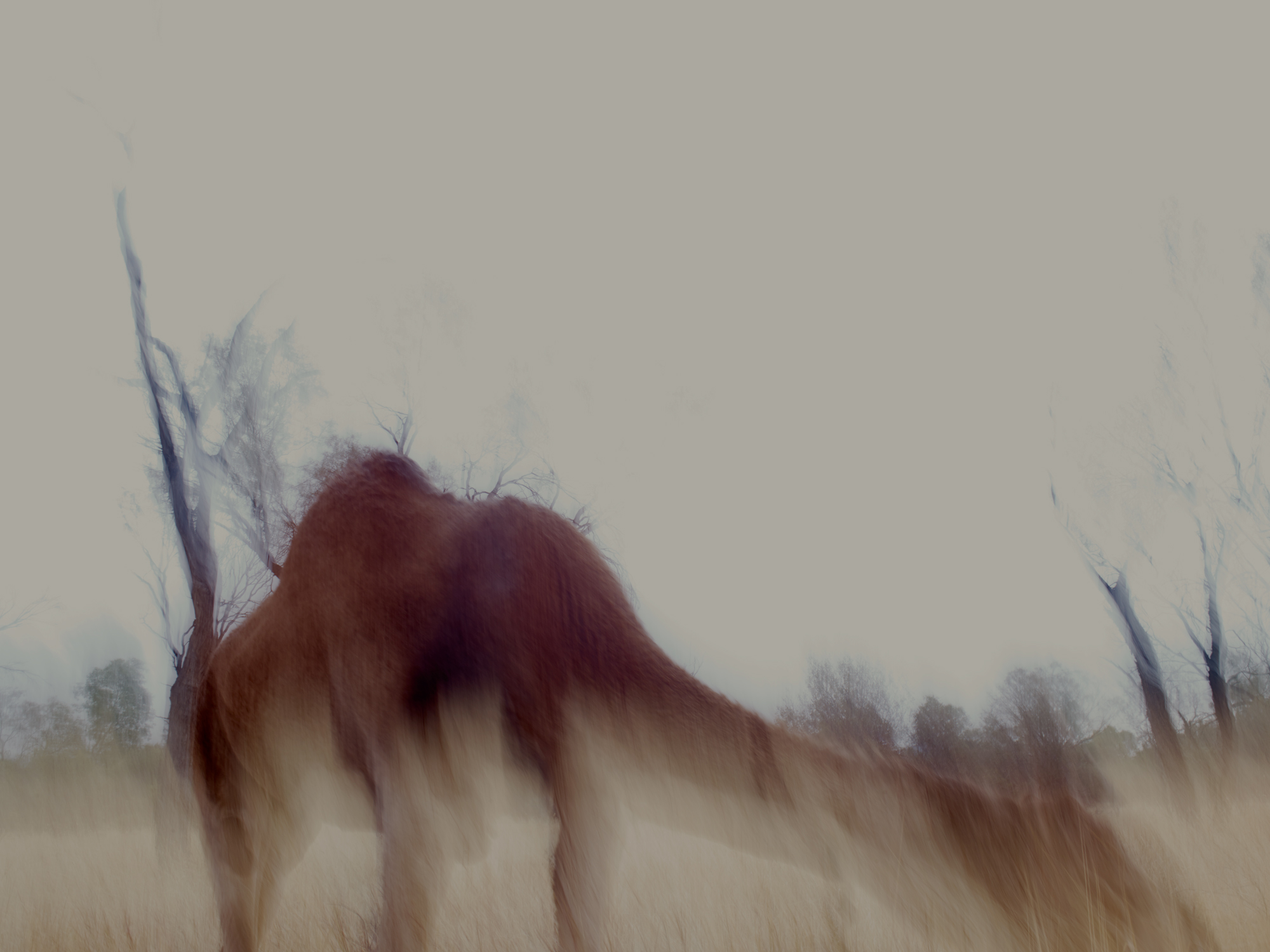 JamesBYoung_camel_NMC.jpg.jpg