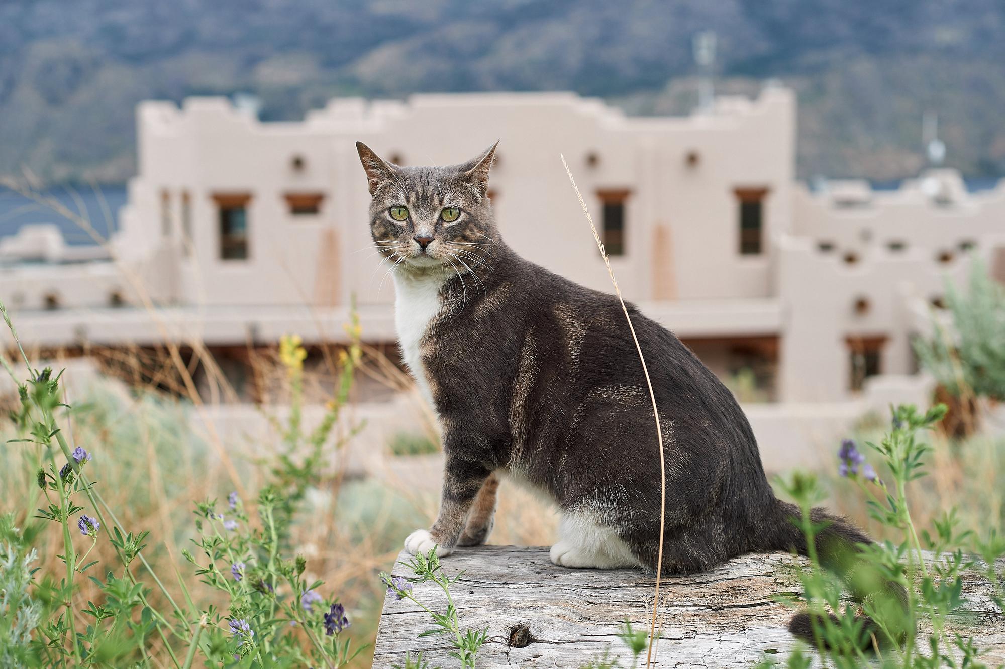 the resident cat at puta norte
