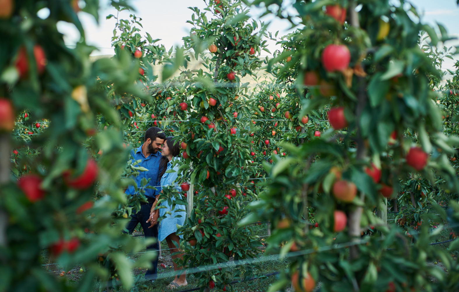 engaged couple in orchard