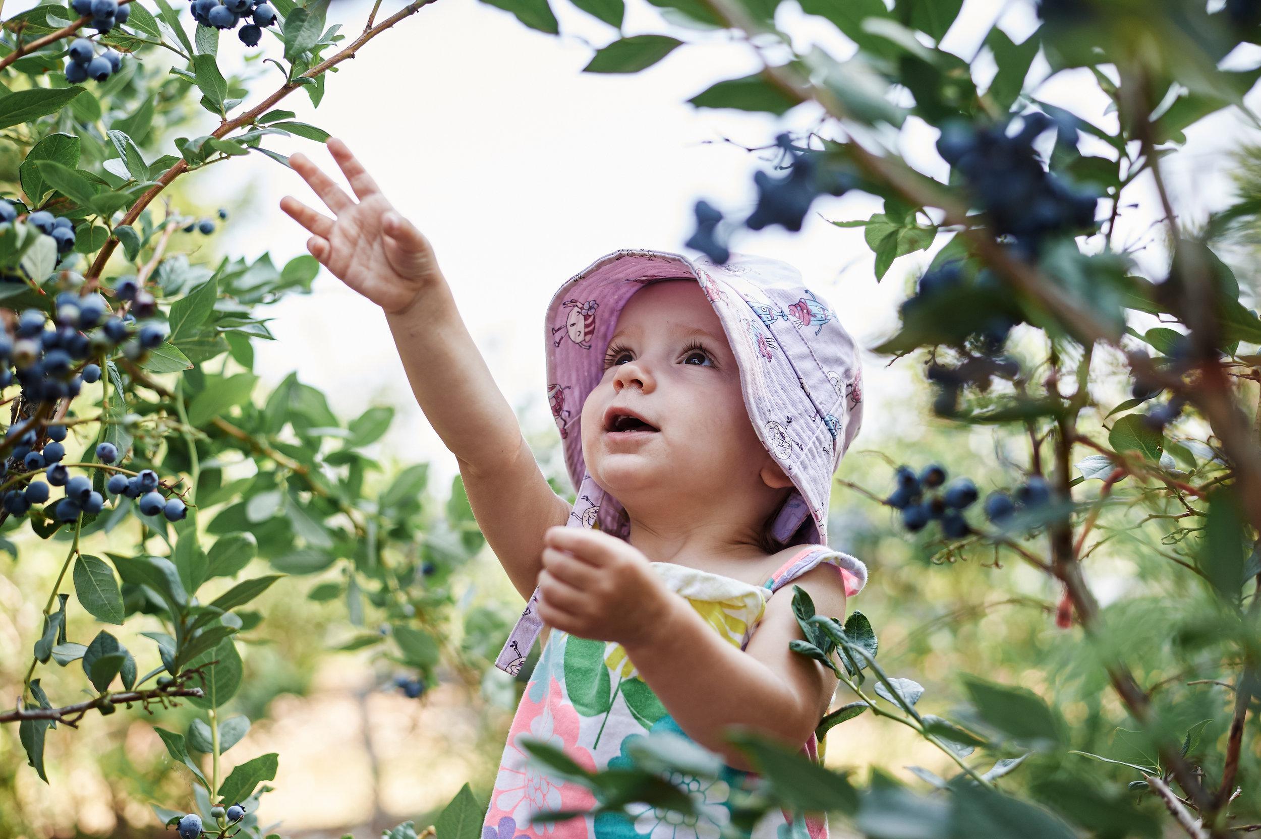 Sofia blueberries 002.jpg