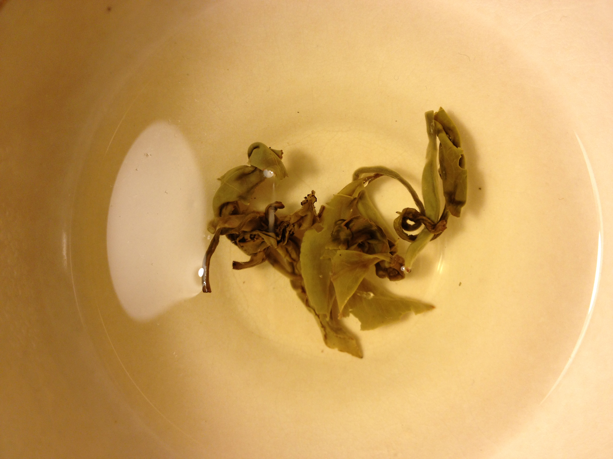 white tea makes amber fluid, 2014