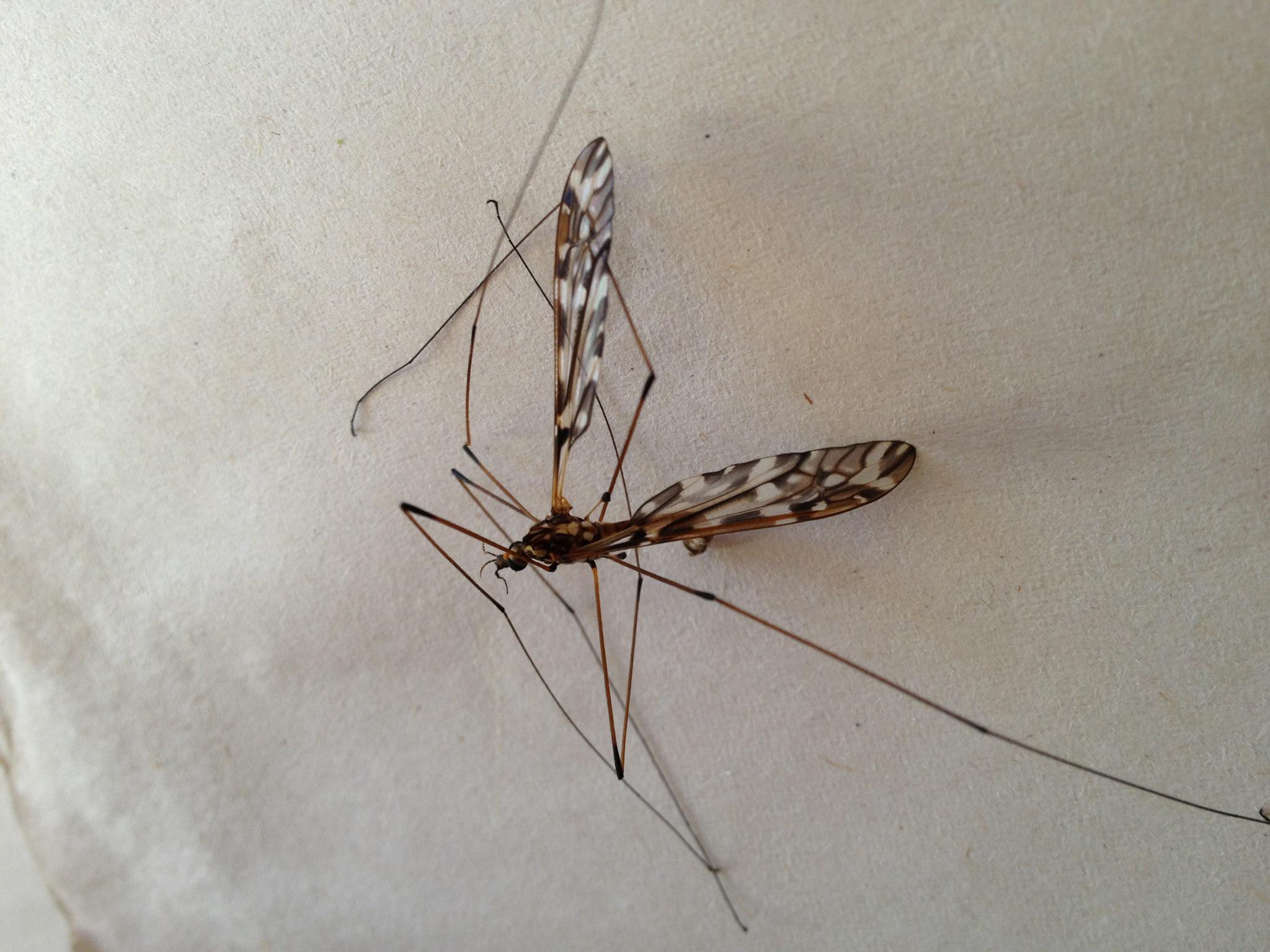 mosquito_2771.jpg
