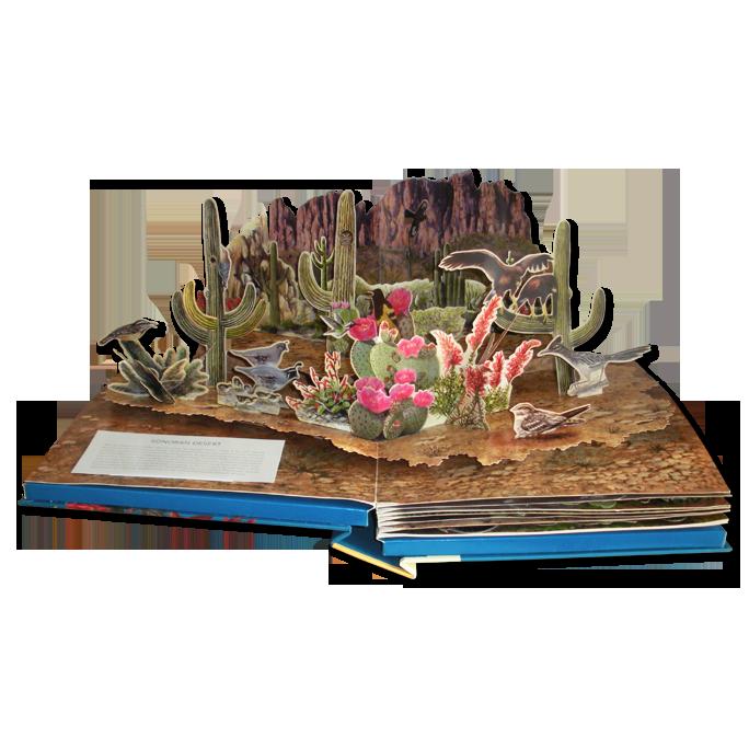 Sonoran-Desert-smaller.png