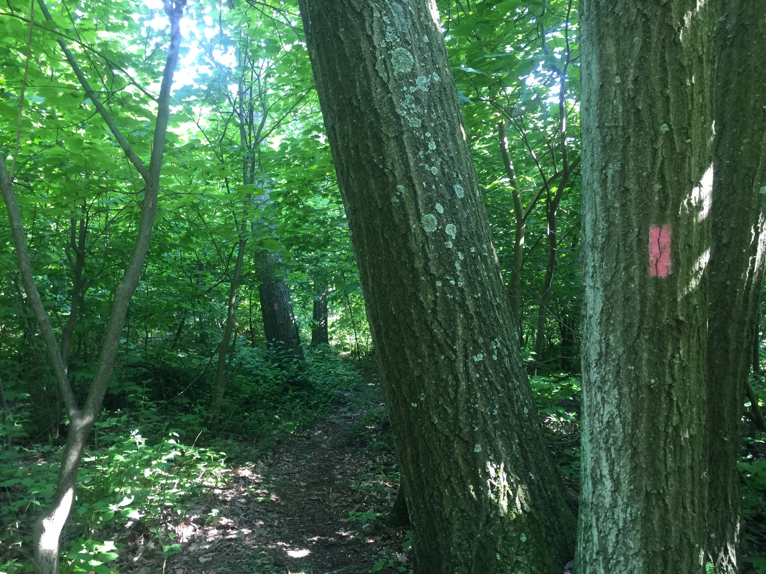 The infamous pink blaze - I did not dare follow and see what was down this trail...