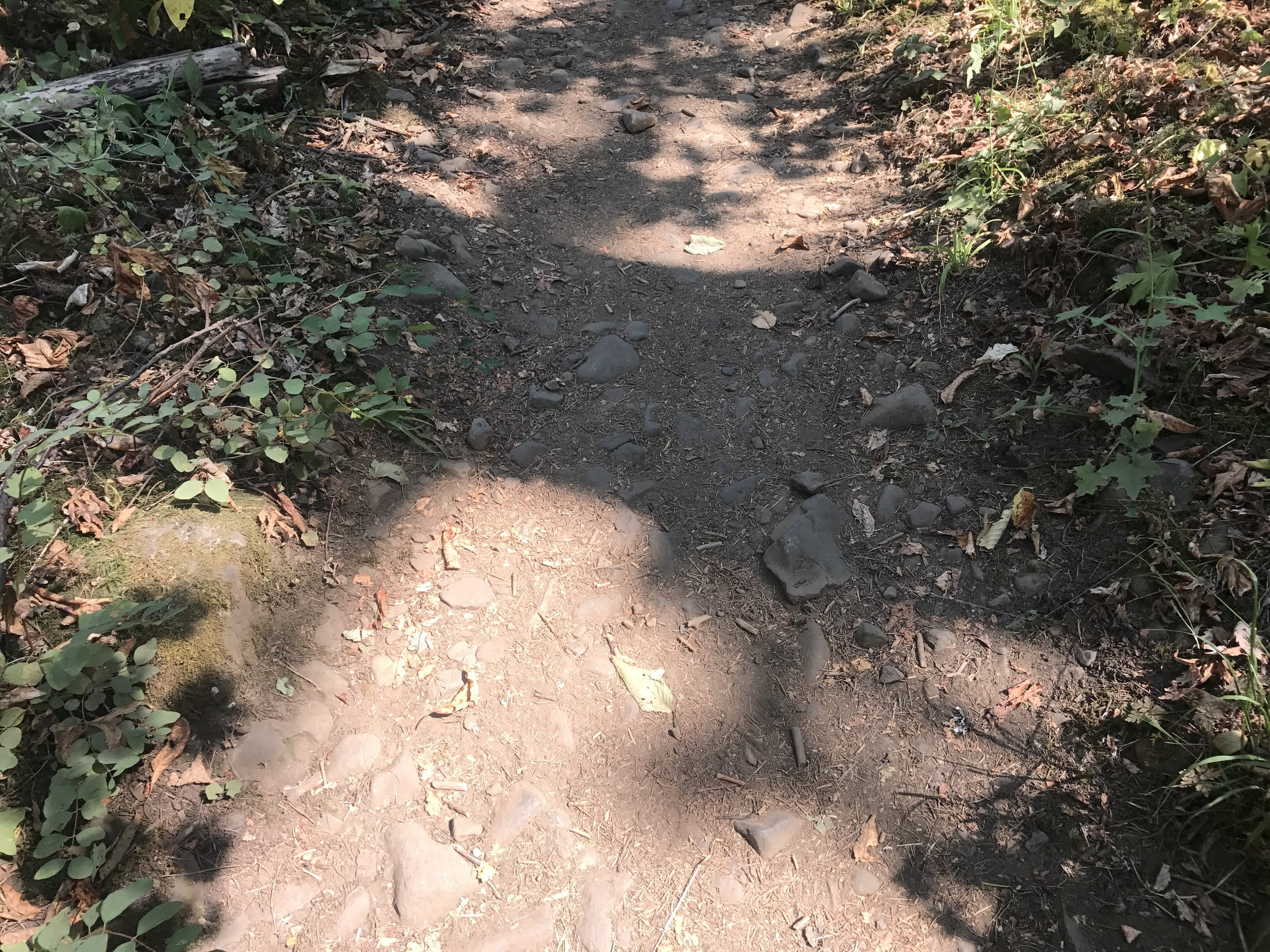 Someone commented on how rocky the trail was in this section - I laughed inwardly and kept on walking.