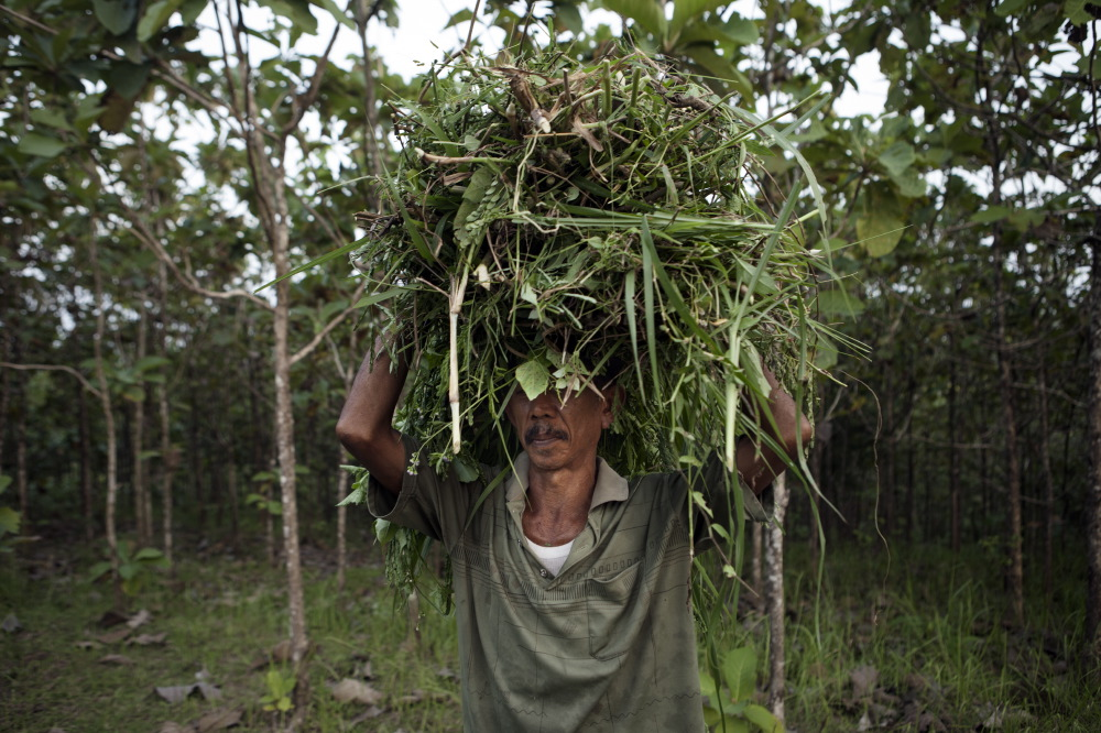 Villager of mount Kemukus collecting weeds.