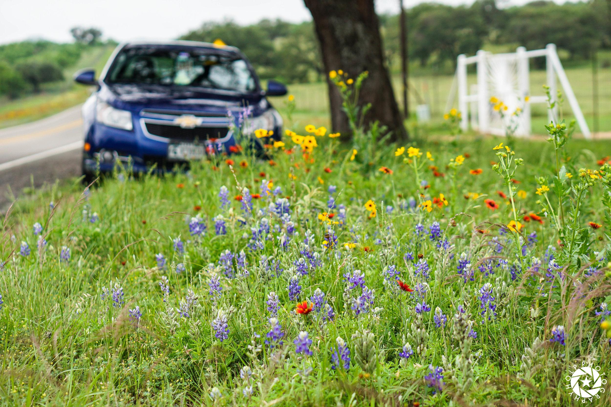 Wildflowers along the road near Llano, Texas.