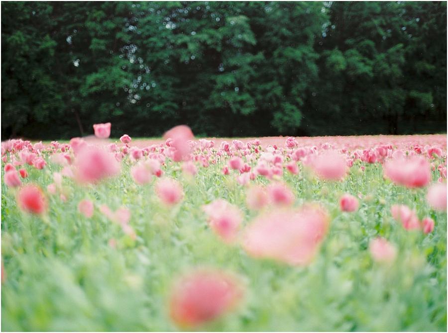 SiegridCain.PoppiesSummer2015_0005.jpg