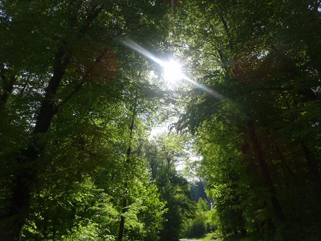 - C'est dans les moments les plus sombres que nous devons nous concentrer pour voir la lumière. (Aristote Onassis