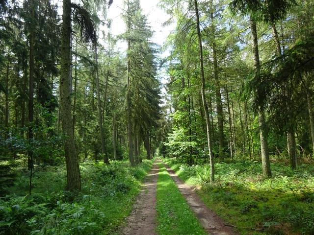 - La nature est un bon guide. Quand on la suit elle nous montre toujours le chemin. ( Julien Allaire)