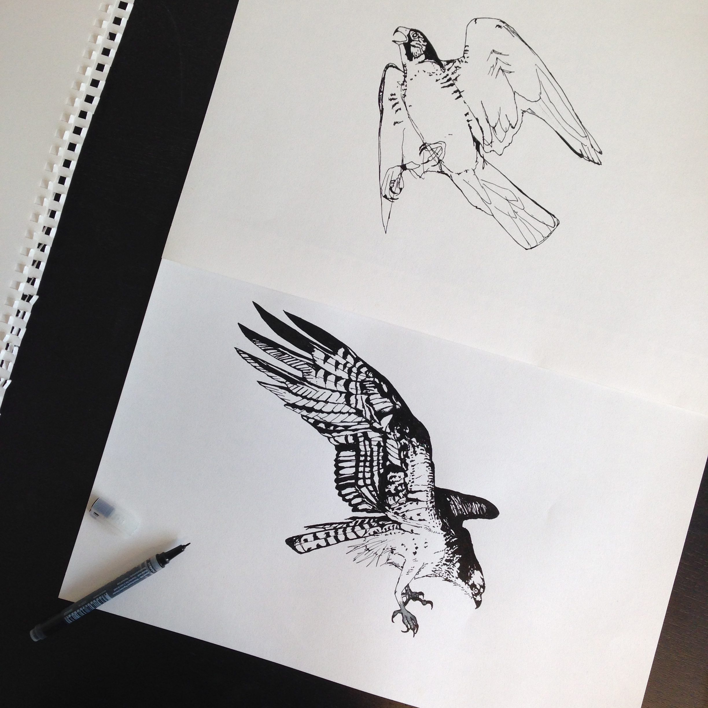 Hand drawn birds of prey, using 'Line Painter' black pen.