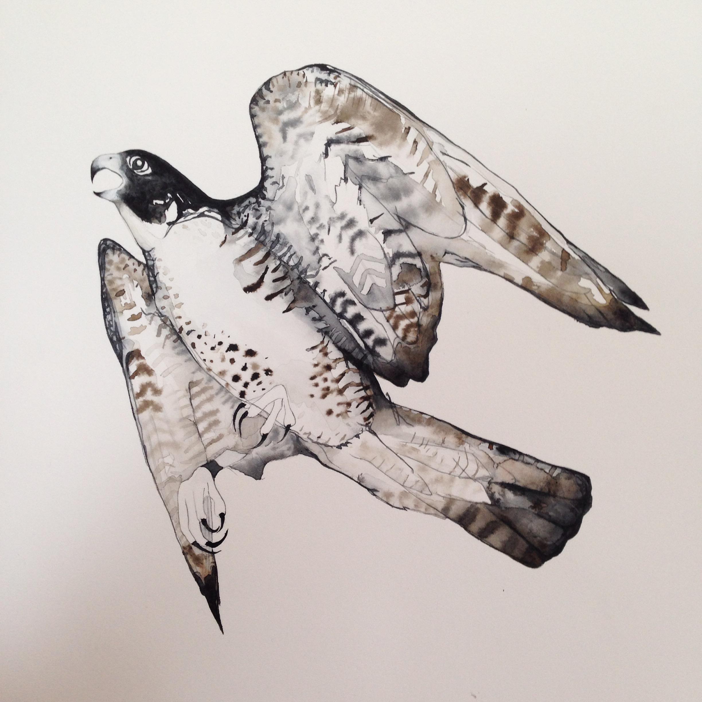 Bird of prey watercolour sketch by Lindsay McDonagh