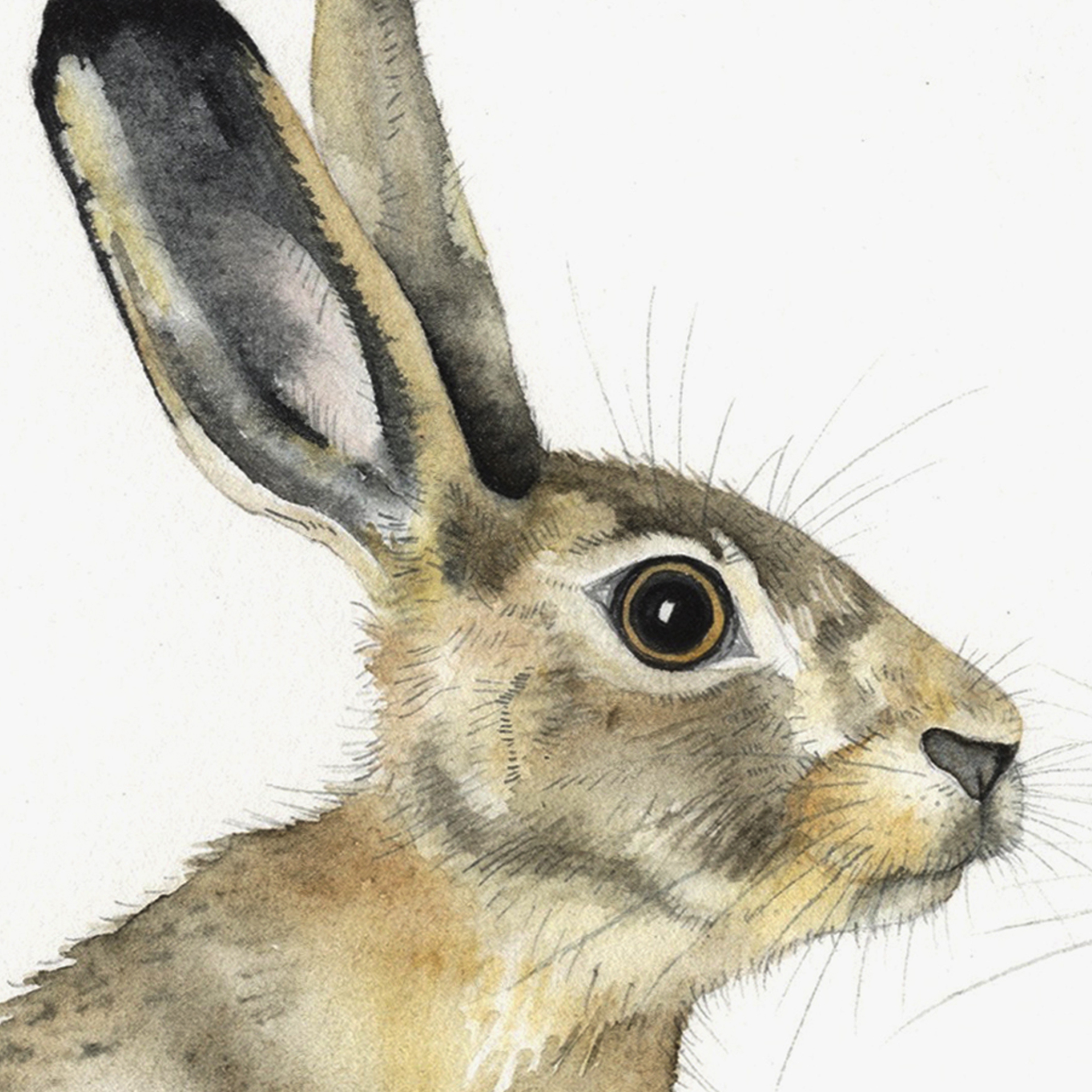 Hare detail watercolour by Lindsay McDonagh