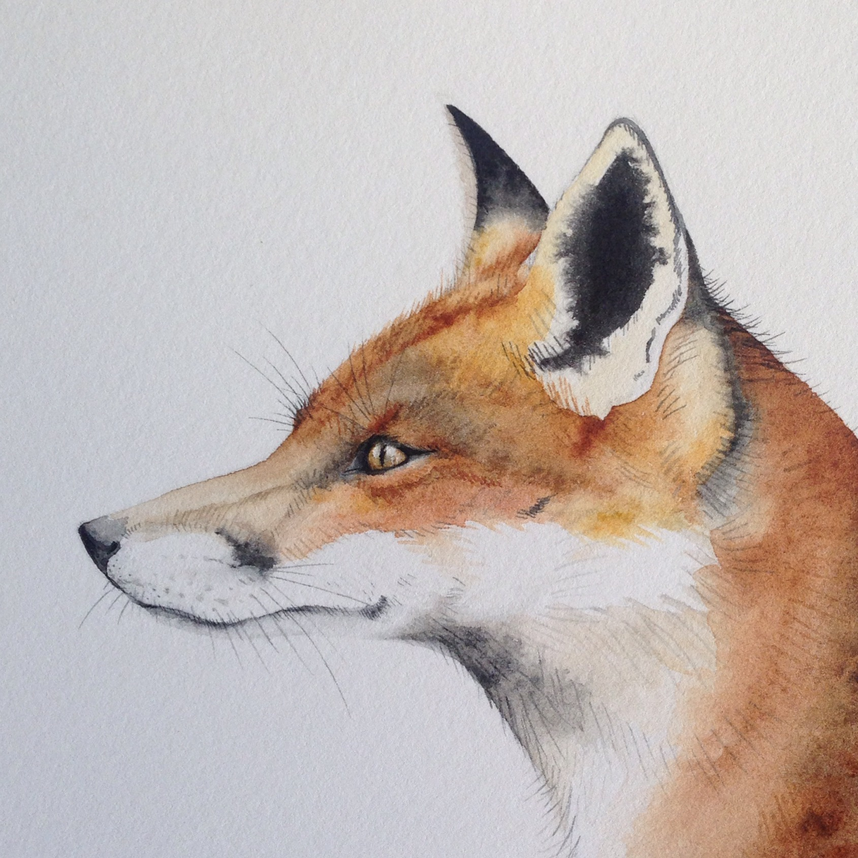 Fox detail watercolour by Lindsay McDonagh