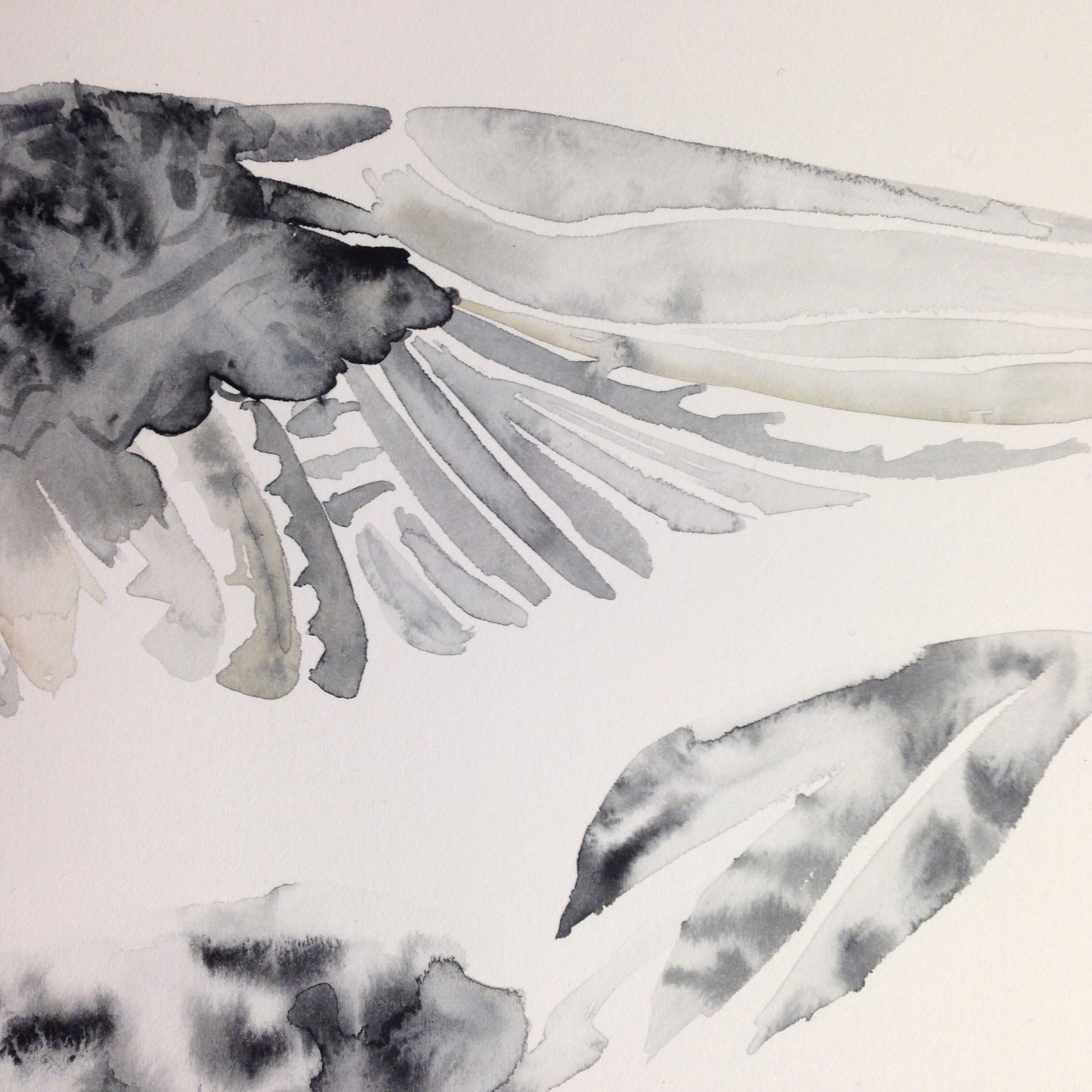 Watercolour of bird wing by Lindsay McDonagh