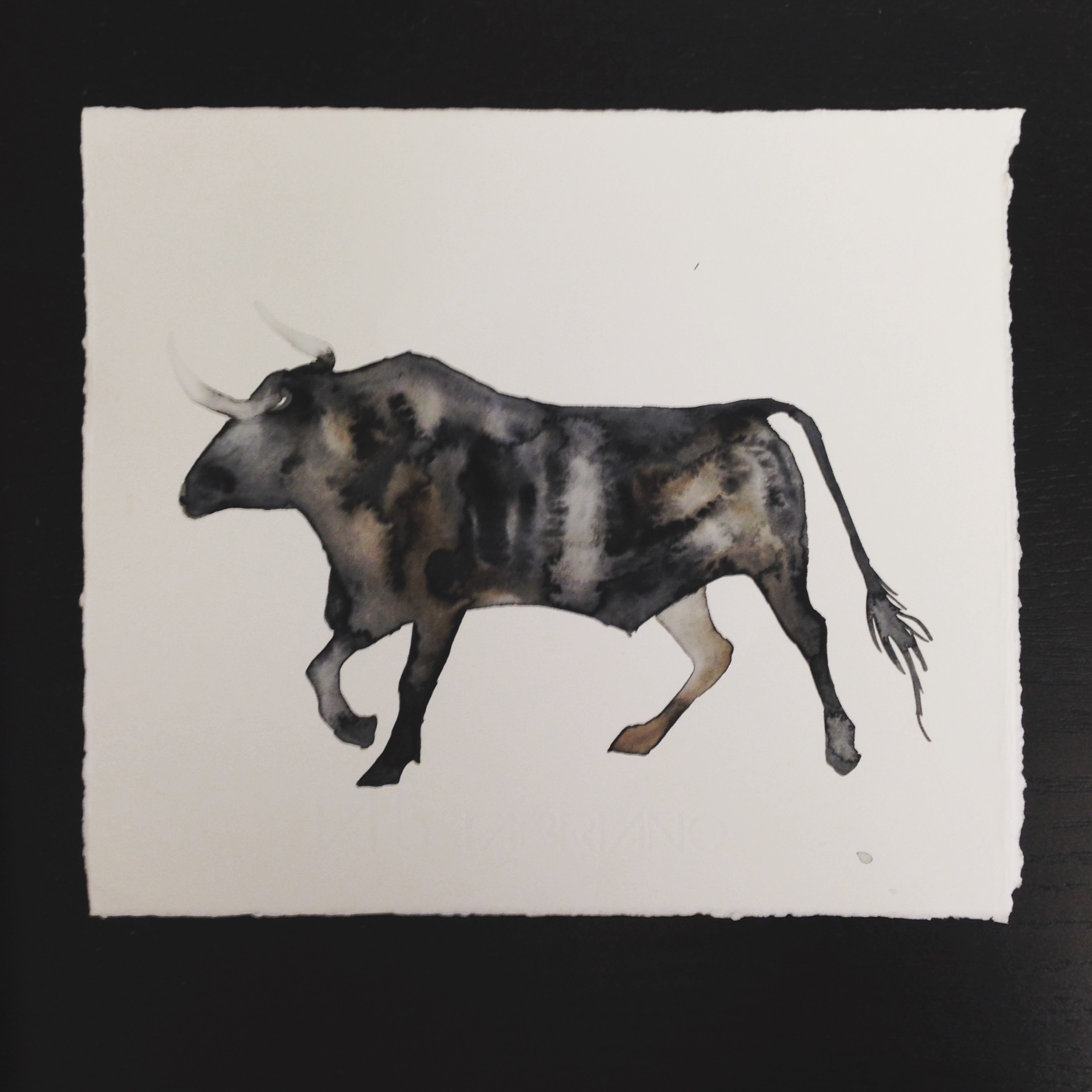 Bull watercolour by Lindsay McDonagh