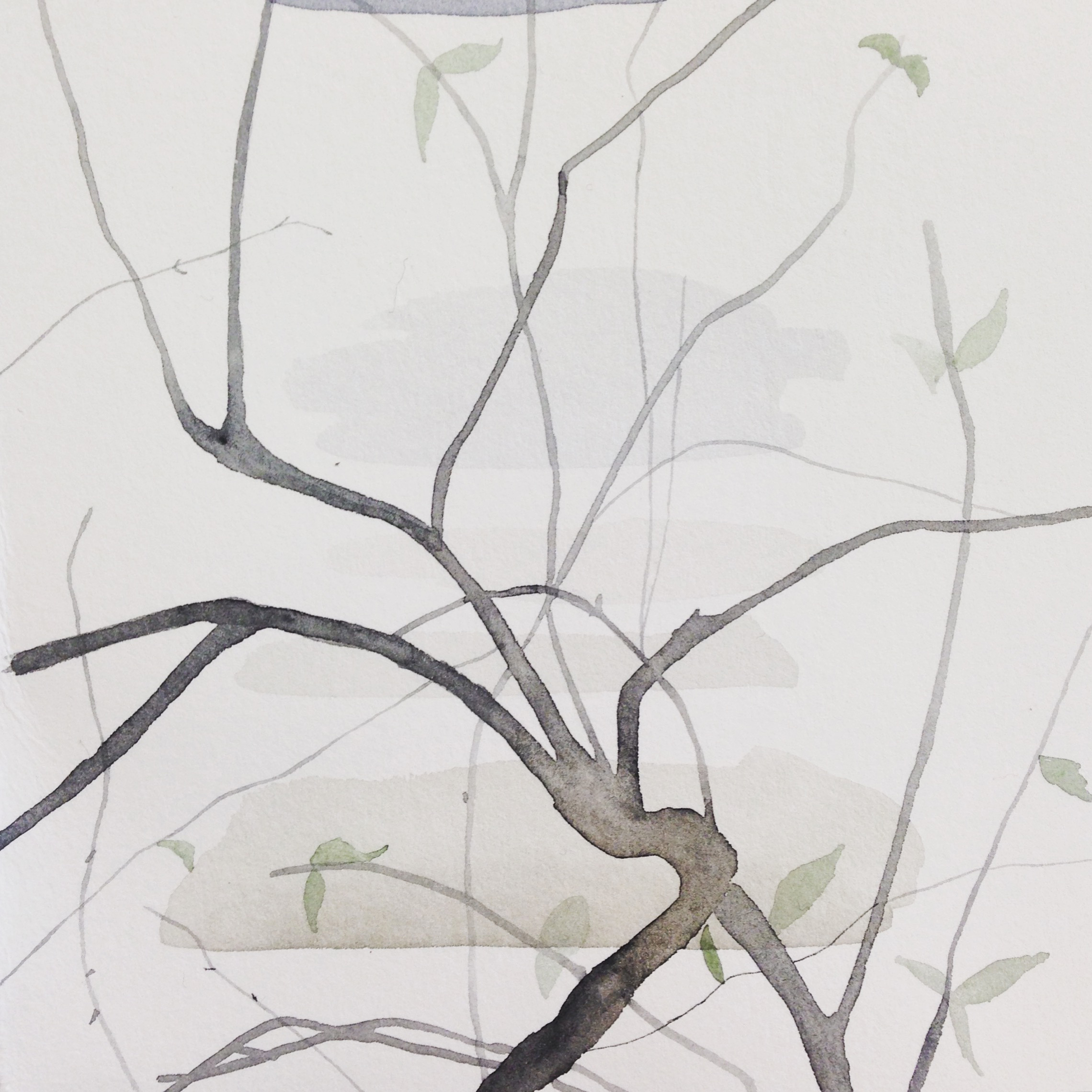 Branches watercolour by Lindsay McDonagh