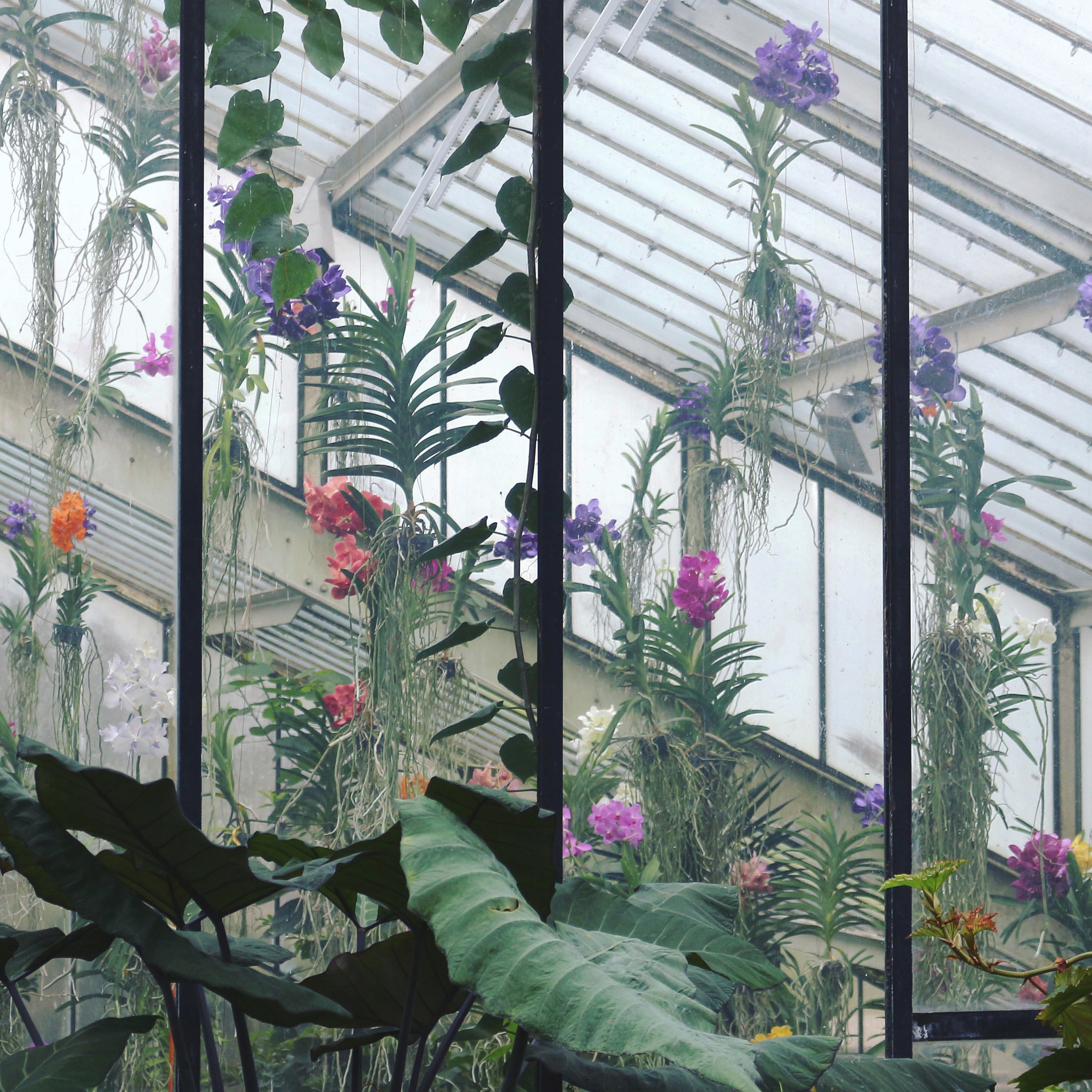 Orchid House photo by Lindsay McDonagh