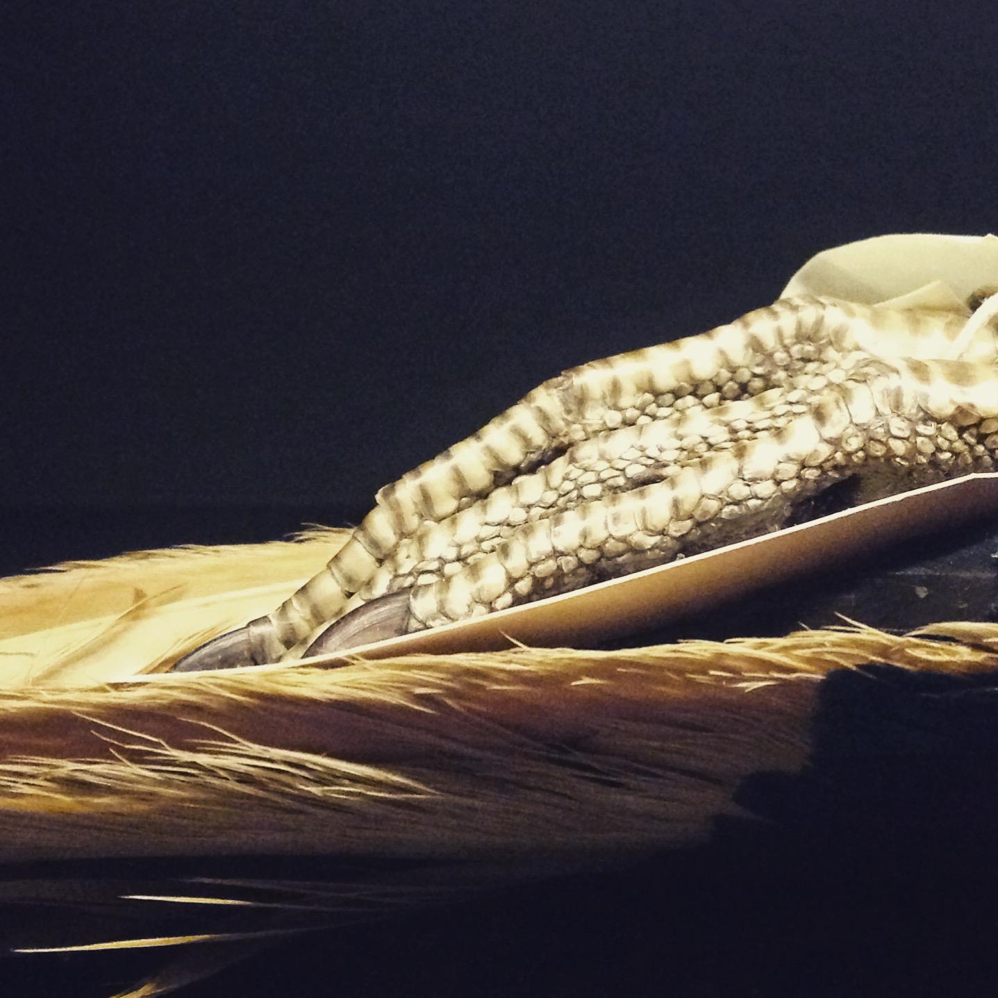 close up birds feet. Photo by Lindsay McDonagh