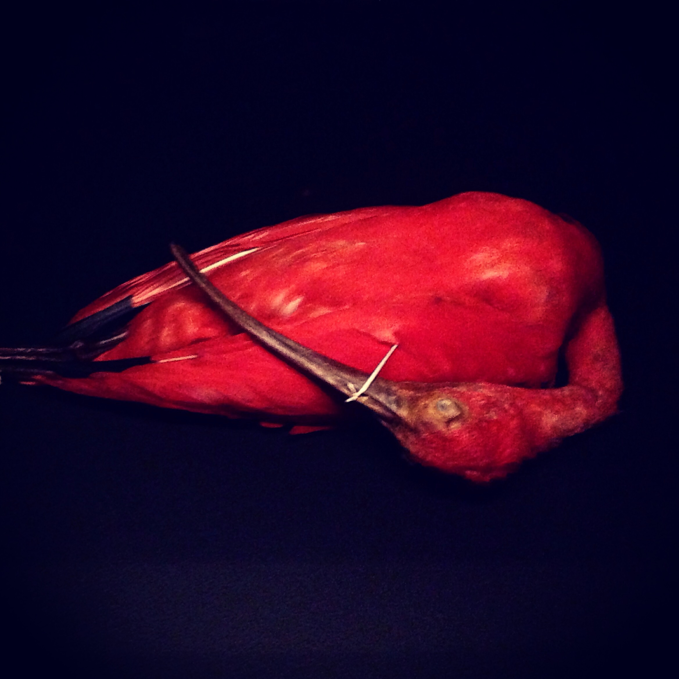 flamingo. Photo by Lindsay McDonagh