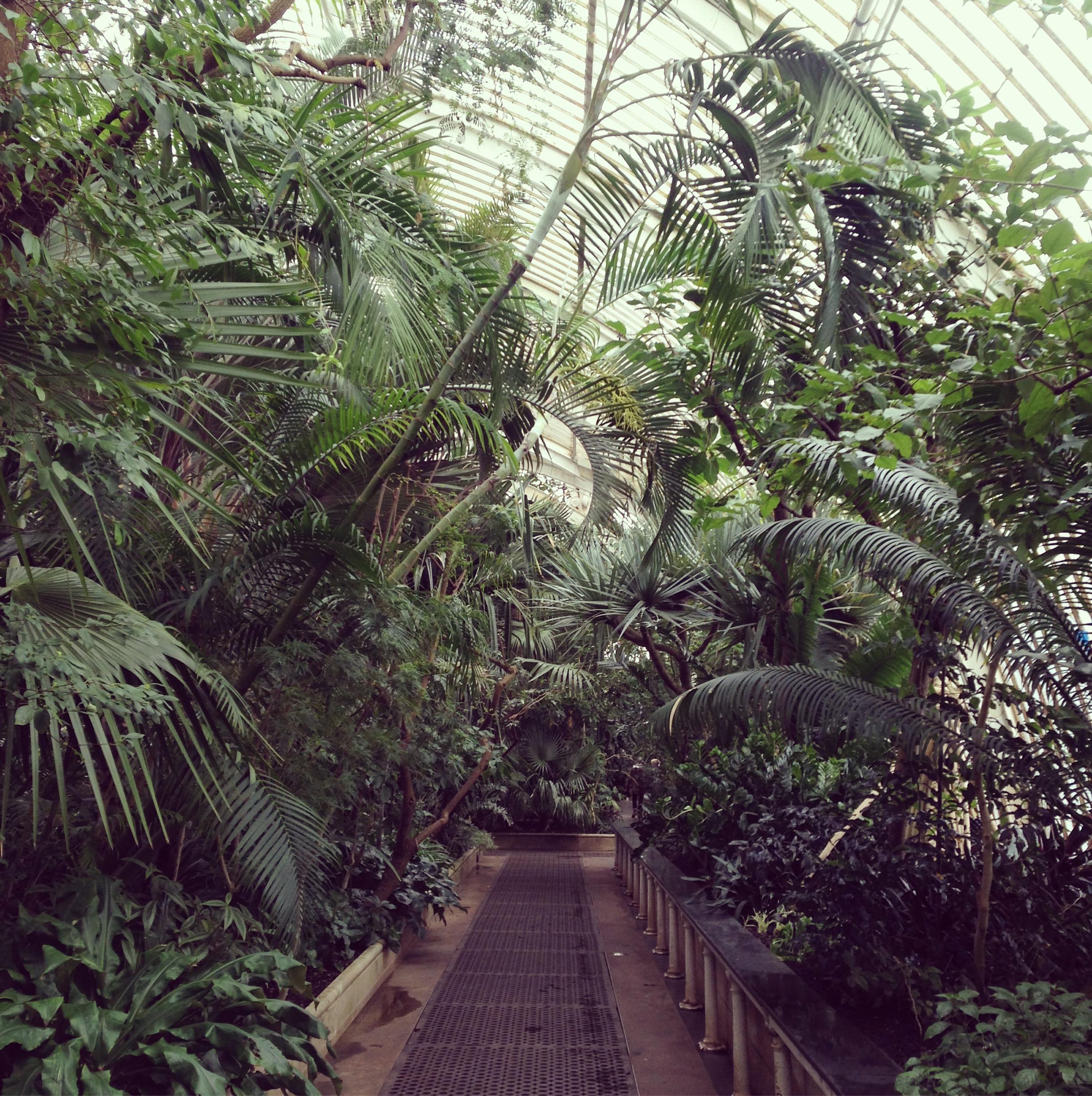 Lindsay McDonagh Palm House