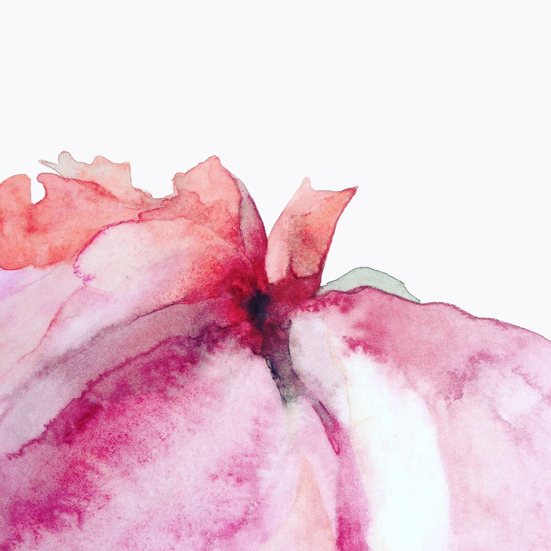 rose detail by Lindsay McDonagh