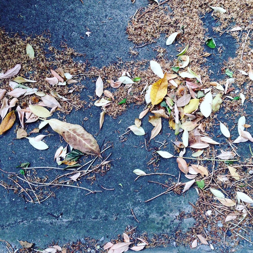 Leaves by Lindsay McDonagh