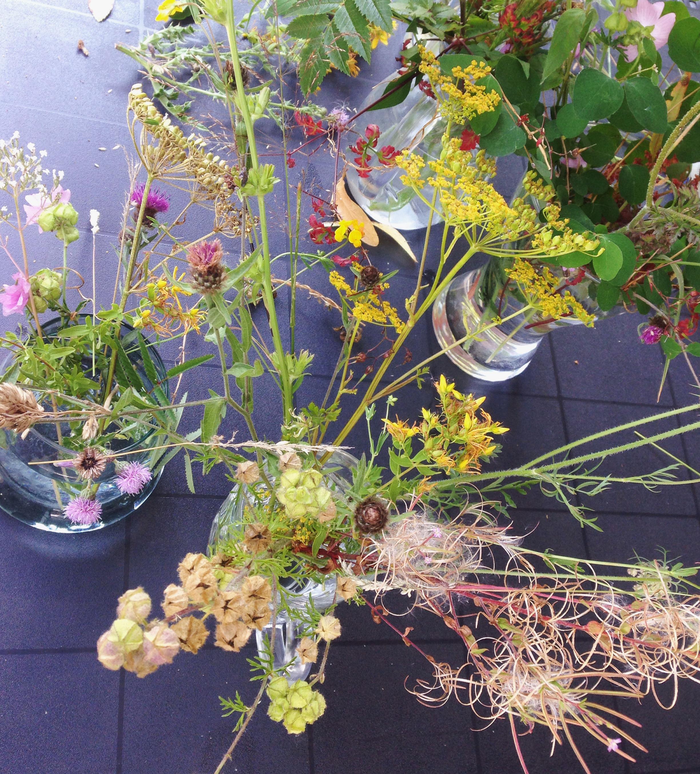 Botanicals photo by Lindsay McDonagh