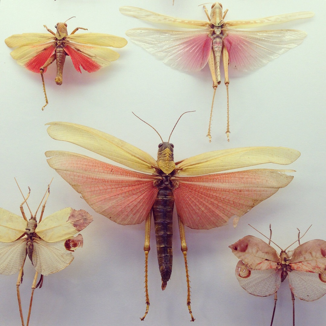 Colourful locust 2 photo by Lindsay McDonagh