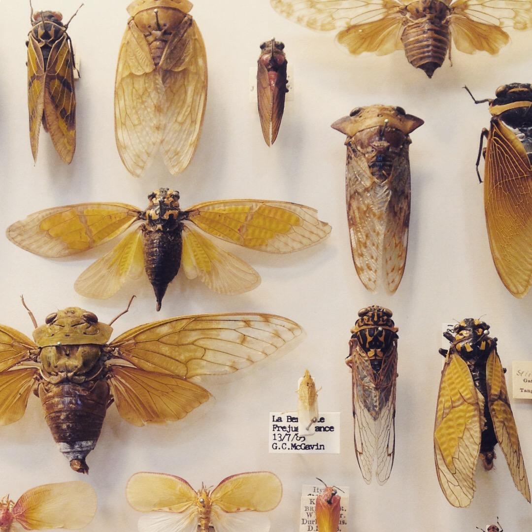 bugs photo by Lindsay McDonagh