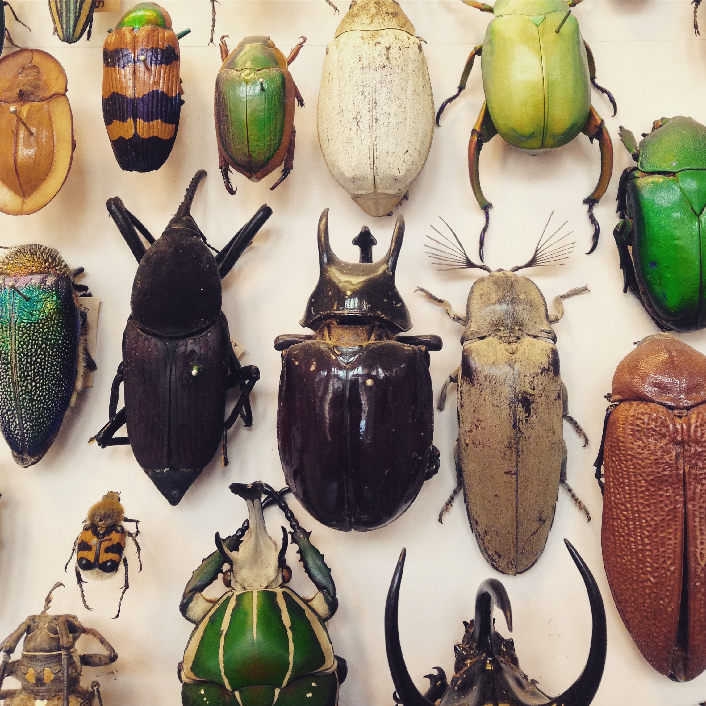 Colouful beetles