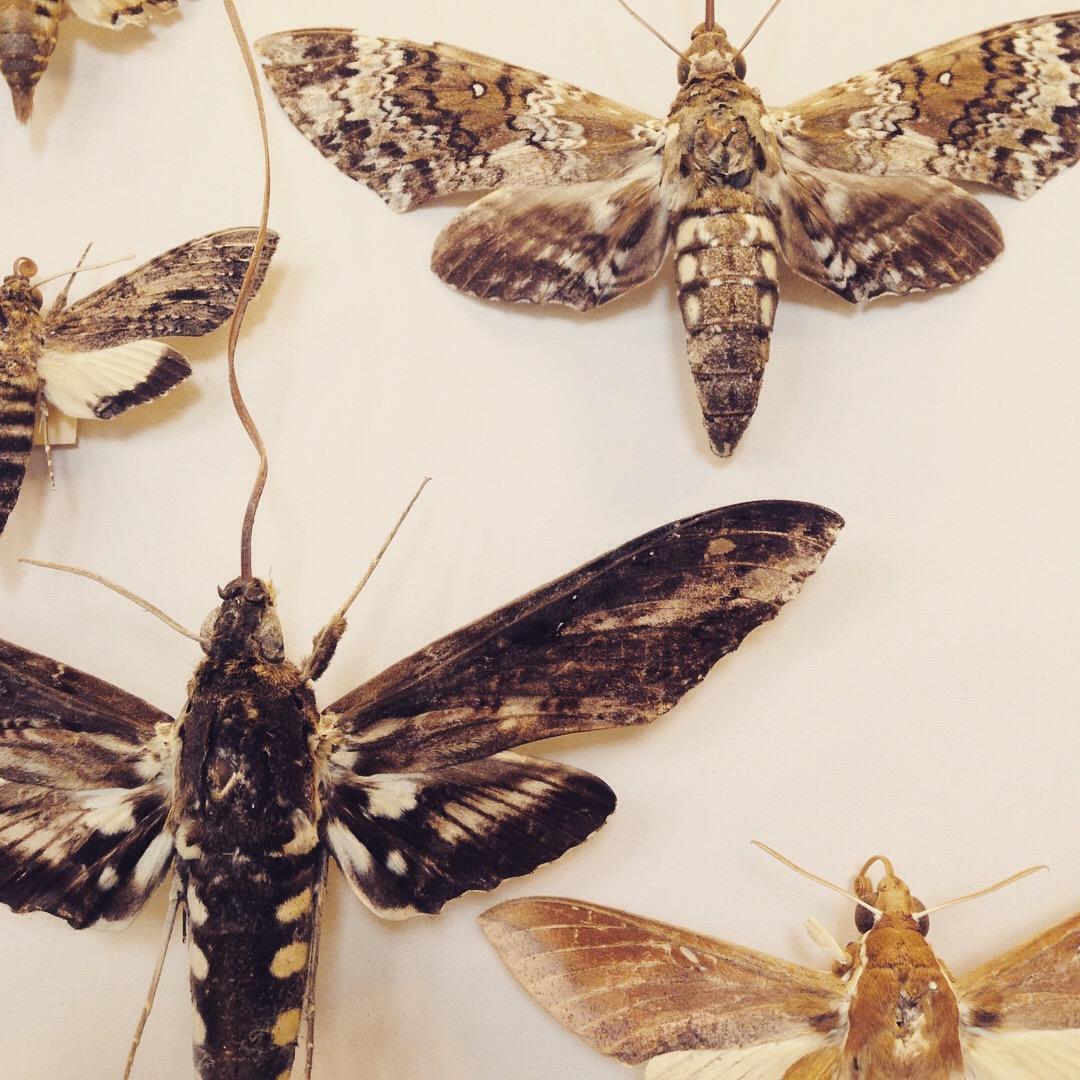 Moth patterns by Lindsay McDonagh