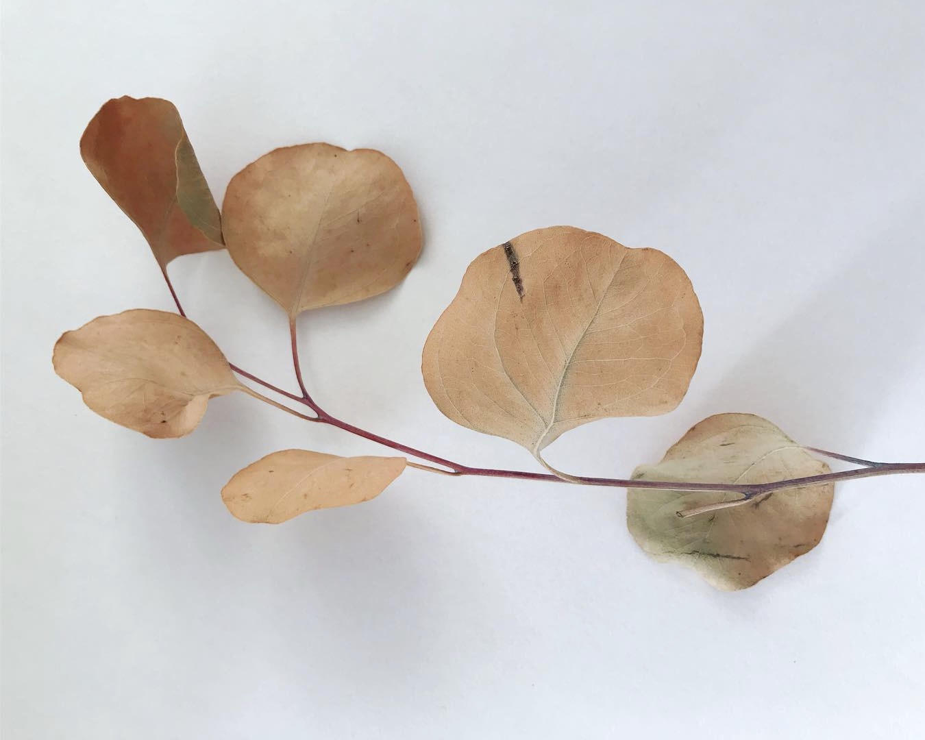 leaves Lindsay McDonagh