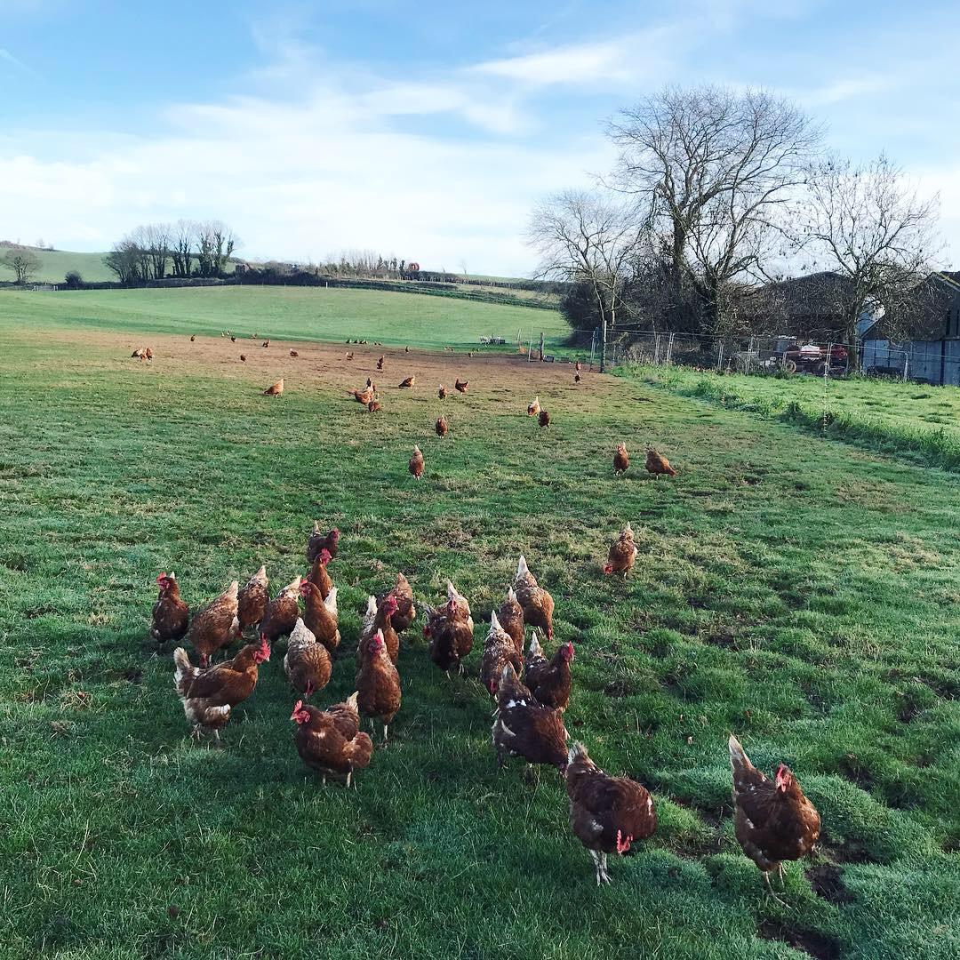 chickens Lindsay McDonagh