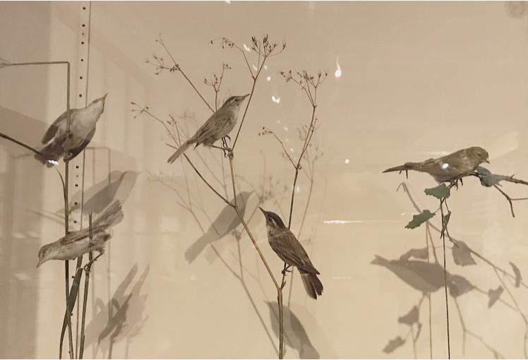 Museum Birds Lindsay McDonagh.jpeg