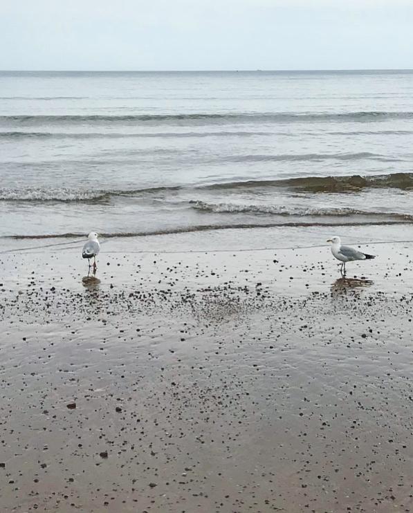 Seagulls Lindsay McDonagh