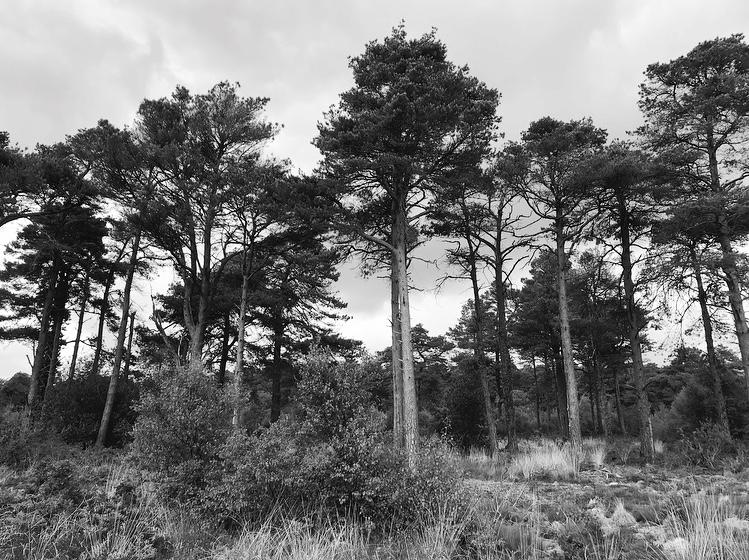 Trees devon Lindsay McDonagh