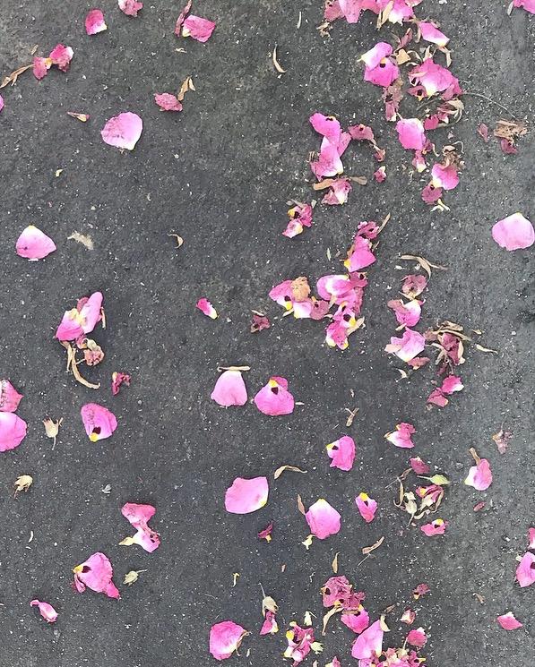 Pink petals by Lindsay McDonagh