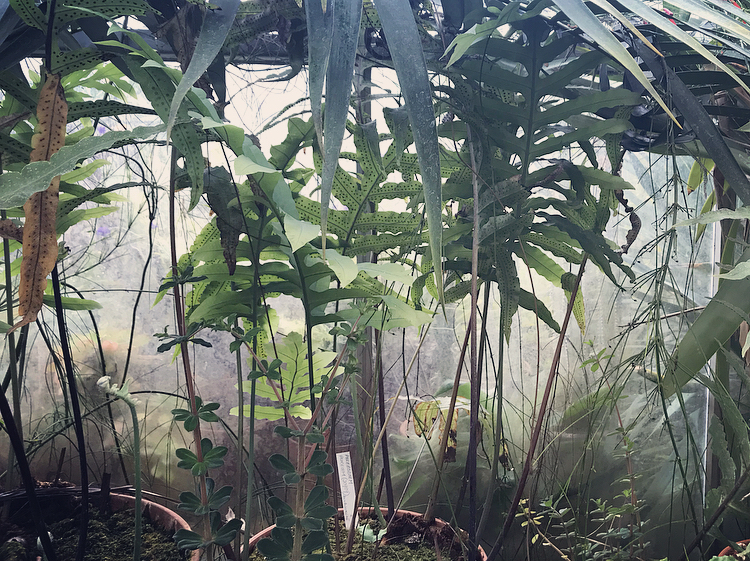 Bristol Botanical Gardens by Lindsay McDonagh