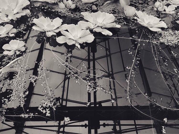 B&W Botanical Garden Lindsay McDonagh.jpeg