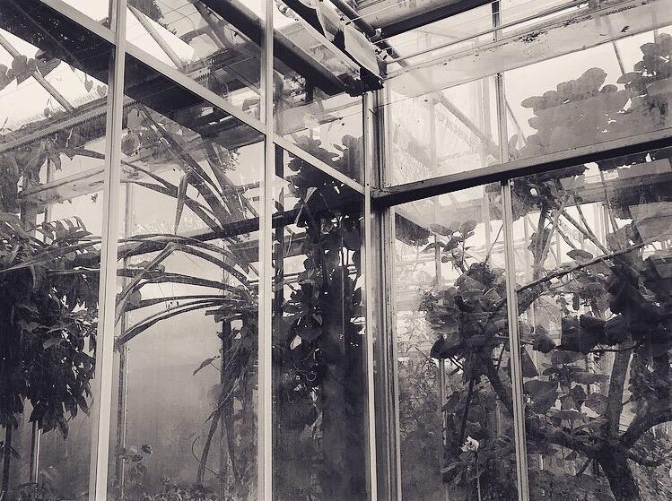 B&W botanical garden Lindsay McDonagh
