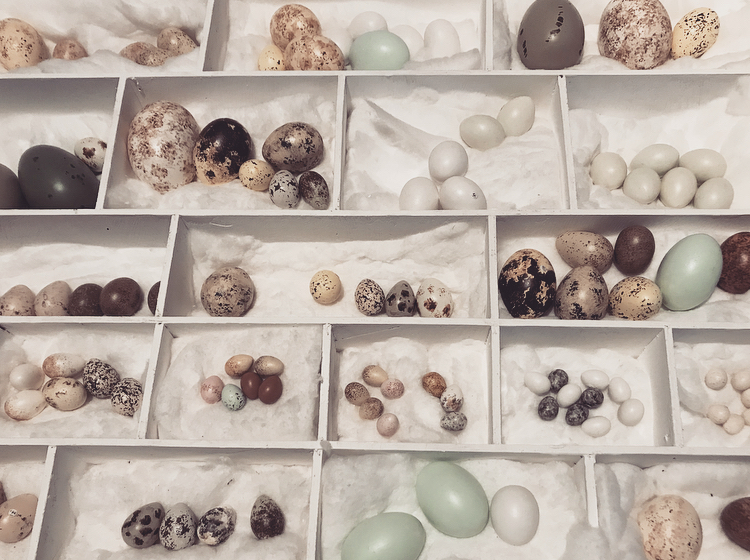 Eggs Lindsay McDonagh