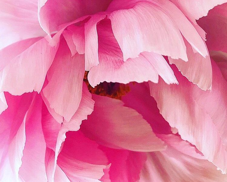 Flower Lindsay McDonagh