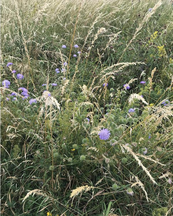 Wild grasses Lindsay McDonagh