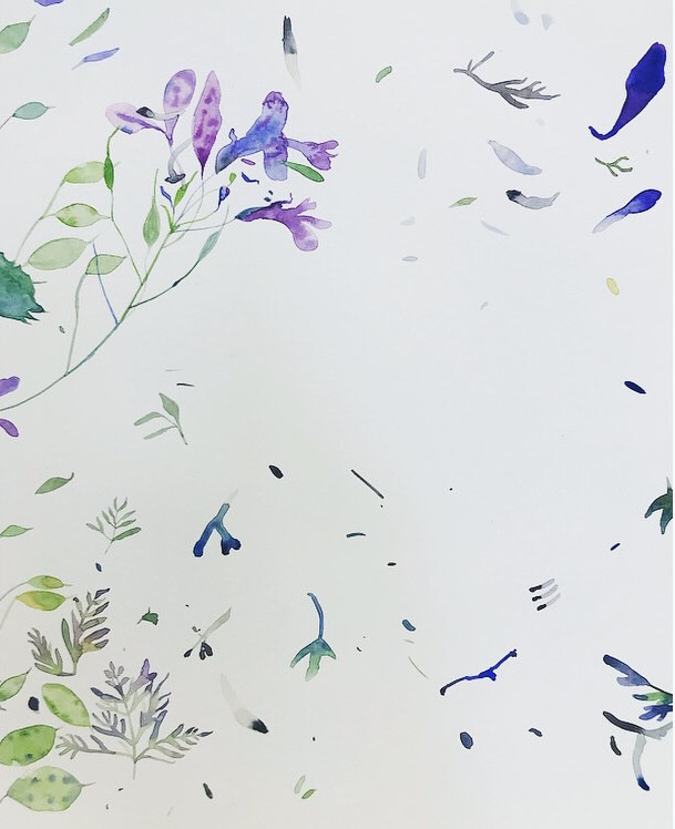Botanical watercolour Lindsay McDonagh
