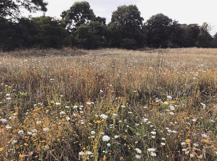Summer Meadow by Lindsay McDonagh