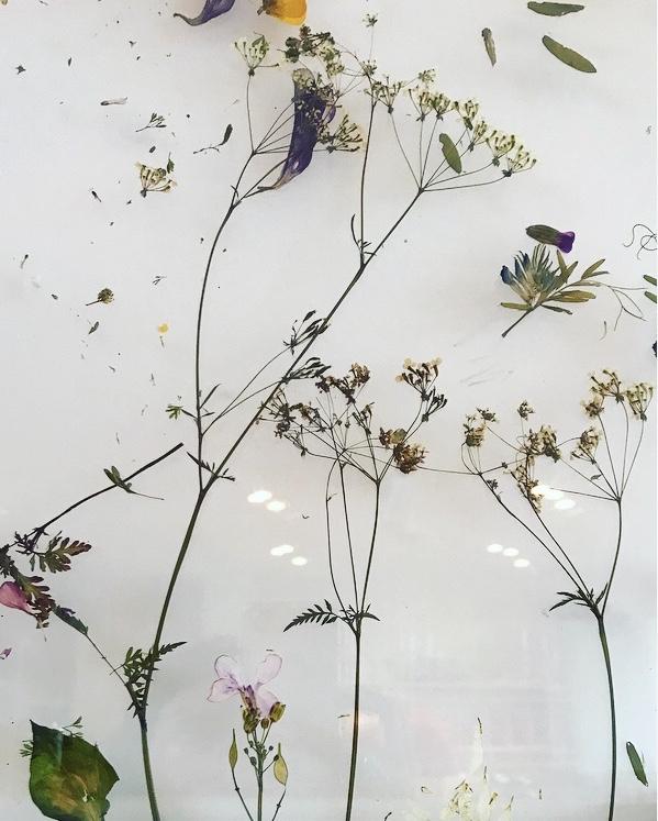 Wildflowers Lindsay McDonagh