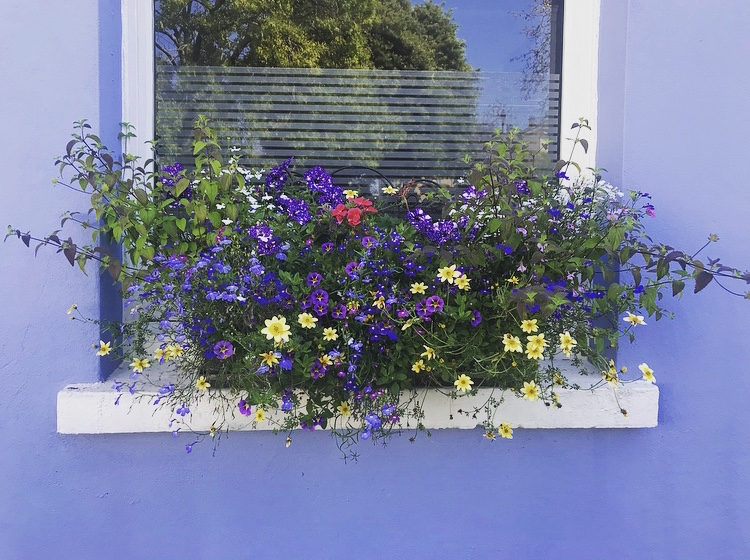 Window Flowers by Lindsay McDonagh
